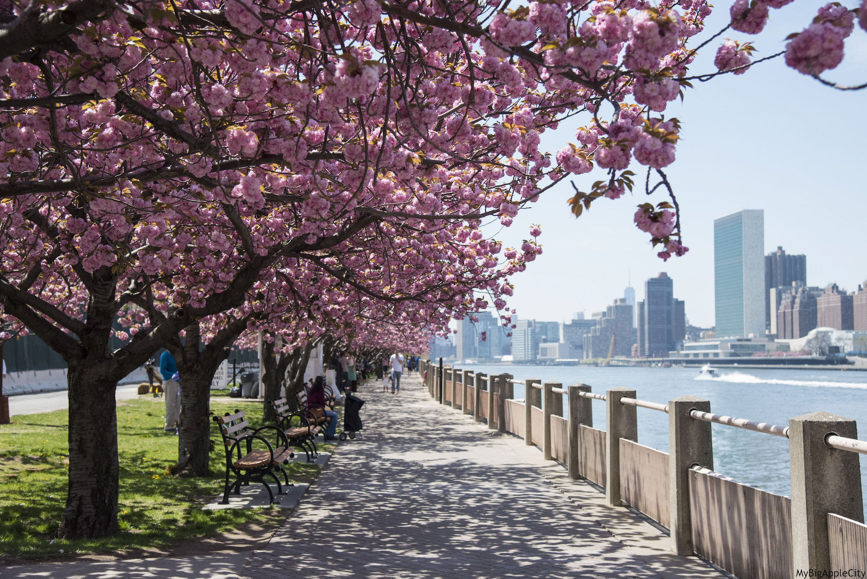 spring-in-nyc-4
